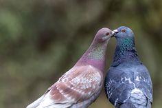 A Little Shag  #Birds #WesternSpringsAuckland #Wildlife