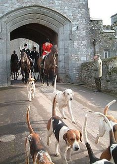 Release the hounds!!  I love the sound of a calm nite and hounds calling on a trail!!!!