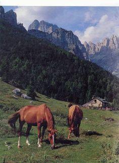 Malga Andalo Dolomiti di Brenta