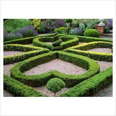 Really sweet Box Hedge topiary's