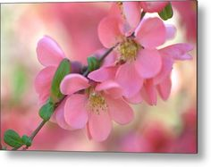 Pink Spring Marvels Metal Print by Jenny Rainbow.  All metal prints are professionally printed, packaged, and shipped within 3 - 4 business days and delivered ready-to-hang on your wall. Choose from multiple sizes and mounting options.