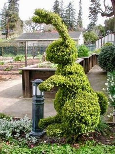 McGregor is in the garden again. Easter topiary Where do I hide? Garden Art, Topiary Garden, Plants, Urban Garden, Fairy Garden, Garden Sculpture, Topiary, Garden Landscaping, Beautiful Gardens