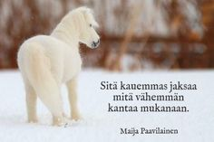 ~~~ Polar Bear, Words, Type 3, Animals, Facebook, Quotes, Quotations, Animales, Animaux
