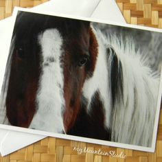 Horse Thoughts Photo Note Card - Equine Photography Montana - myMountainStudio