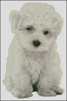 Bichon Puppy -  Cross Stitch Hand Paint Chart Patterns. Being offered at Hoffman Distributing this Friday July 19th! Pattern comes as a Needle Point Now as well!
