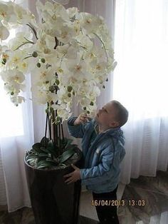 Best 12 Aprenda a cuidar de Phalaenopsis, clique na foto -------------------------------------------------------------------------- falenopsis phalaenopsis orquídea borboleta Orchid Planters, Orchid Flower Arrangements, Orchids Garden, Garden Plants, All Plants, Indoor Plants, Indoor Garden, Exotic Flowers, Beautiful Flowers