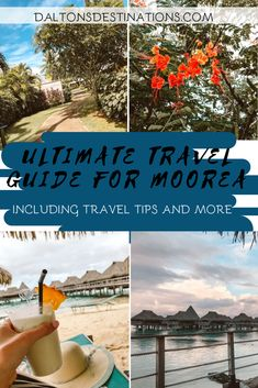 If you are traveling to Moorea, French Polynesia you must read this travel guide! includes where to stay, what to do, and more! Moorea Island, Moorea Tahiti, Temple Ruins, Shark Swimming, Overwater Bungalows, Best Sites, Ultimate Travel, South Pacific