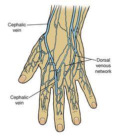Thumb Veins Diagram - Block And Schematic Diagrams •