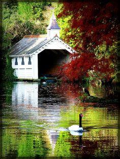 Beautiful victorian lake at Trevarno estate in Cornwall.  #England #reflection #photography