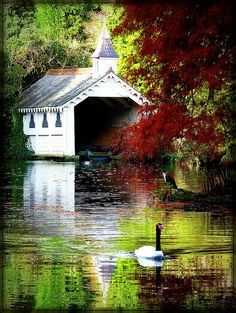 Beautiful victorian lake at Trevarno estate in Cornwall.