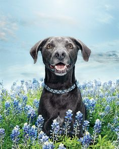 Photographer Randal Ford doesn't play fair when it comes to putting cute dogs in pretty flowers.