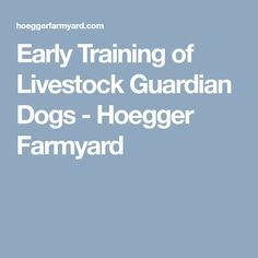 Early Training of Livestock Guardian Dogs - Hoegger Farmyard