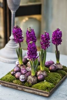 Fröhliche und frische Tischdeko mit Hyazinthen Happy and fresh table decoration with hyacinths Christmas Flower Arrangements, Christmas Flowers, Floral Arrangements, Decoration Christmas, Christmas Ornaments, Deco Floral, Floral Design, Spring Bulbs, Bulb Flowers