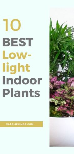 Looking For A Low-Light Indoor Plant For Your Home Or Office? Look at These 10 Beautiful Houseplants They're Perfect For Spaces That Get Little Light, Which Makes Them Very Easy To Care For. They're Even Perfect For Gardening Beginners Low Maintenance Indoor Plants, All About Plants, Pothos Plant, Low Light Plants, House Plant Care, Jade Plants, Succulent Care, Drought Tolerant Plants, Succulents Diy