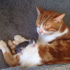 Cristina Piapia found a tiny newborn kitten and rescued him but she didn't expect her older rescue cat to become his cat papa.