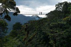 Nyungwe Forest in Rwanda