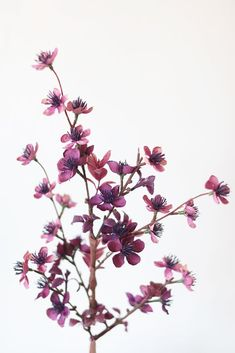Give your spring floral arrangements and wedding flower bouquets a gorgeous pop of purple with this artificial flowers pick of plum blossoms. Purple Tall x Wide Wide Blooms Silk with Plastic Leave Accents Wired Stem Shop All Faux Spring Flowers