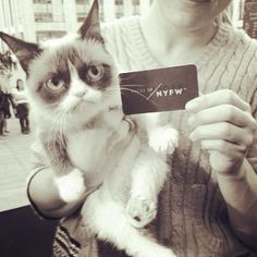 Grumpy Cat in the fashion week in New York 2013 photo Grumpy Cat Quotes, Sad Cat, Make Up Your Mind, Cat Pin, My Spirit Animal, Cute Creatures, Cat Love, Kitten, Grumpy Kitty