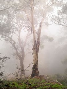 """coiour-my-world: """"""""Ghost Gums"""" ~ Jeff Grant """" Tree Photography, Landscape Photography, Perth, When To Plant Seeds, Australia Landscape, Beautiful Places, Beautiful Pictures, Eucalyptus Tree, Australian Bush"""