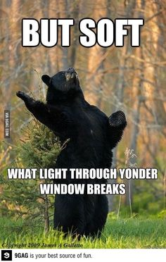 ... + images about Puns on Pinterest | Pun dog, Animal puns and Mullets  Animal Shakespeare Memes