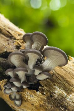Mushrooms by JohnH Photography on 500px