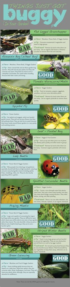 Guide to 10 Garden Bugs - good and bad - and how you get rid of the baddies naturally.