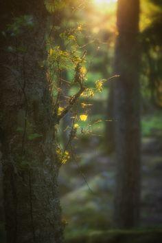 Explore öys' photos on Flickr. öys has uploaded 4017 photos to Flickr.