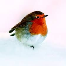 Image result for robins Robins, Christmas Cards, Bird, Image, Xmas Cards, Birds, Robin, Christmas Greetings, Christmas Letters