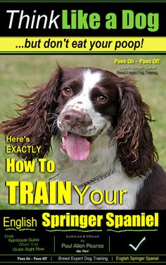 """English Springer Spaniel Dog Training eBook by English Springer Spaniel Dog Breed Expert Paul Allen Pearce. 