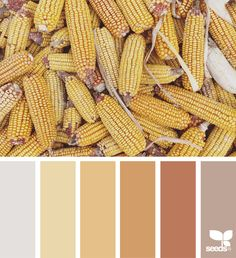 { color harvest } image via: @suertj