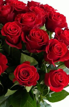 Beautiful Rose Flowers, Red Flowers, Beautiful Flowers Hd Wallpapers, Rose Flower Wallpaper, Red Rose Bouquet, Rose Pictures, Good Morning Flowers, Arte Floral, Rose Buds