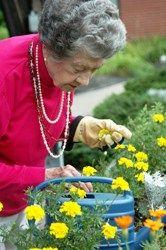 gardening for elderly