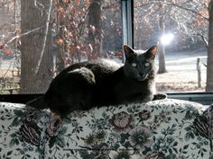 Our cat, Shadow, sunning himself on the back of the couch.