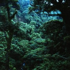 Yakushima rainforest showing reverence for nature and Japanese traditions in…