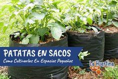Cómo cultivar patatas en casa con sacos - La Huertina De Toni My Images, Puerto Rico, Gardens, Potato Sacks, Planting Potatoes, Potatoes Growing, Organic Farming, Puerto Ricans