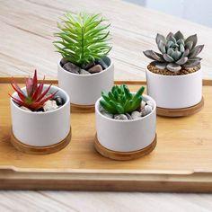 Small Succulents, Succulent Pots, Planting Succulents, Succulent Containers, Concrete Plant Pots, Ceramic Planters, Planter Pots, Painted Flower Pots, Flower Planters