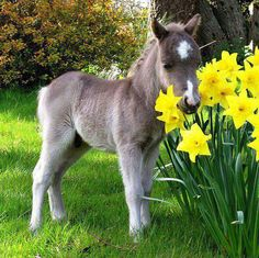 I didn't realize how little he was until i noticed that they are Daffodils he's standing next to... OMG!