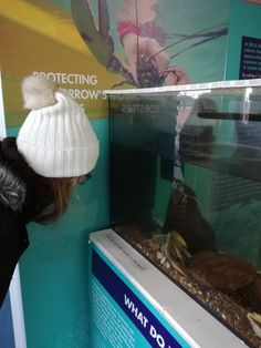 The lobster in the tank was sponsored by a member of the public as part of our V notch scheme and set free after the exhibition