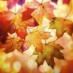 'Colours of Autumn' Giclée print  £12.00