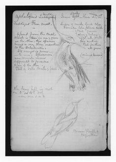 Brazilian Sketchbook and Journal II (1865) of artist Martin Johnson Heade