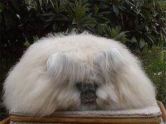 Funny Angora Rabbit New Pictures 2012 | Funny Animals
