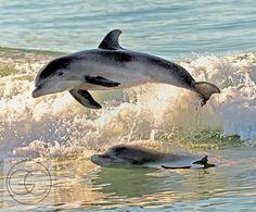 florida wild life | Gerard Closset | Florida: Wildlife