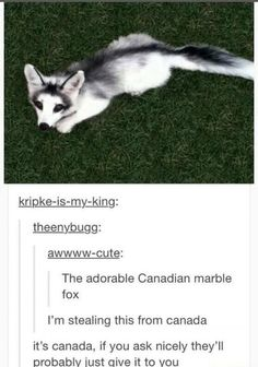 Immagine di canada, sorry, and tumblr