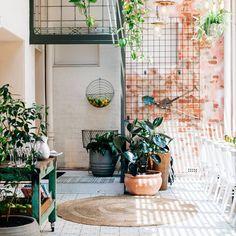 Petunia Rug | Fitzroy Town Hall Hotel