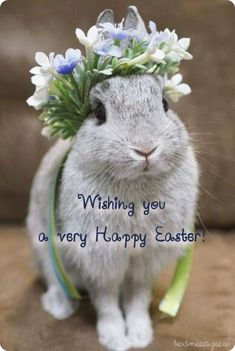 Sweet bunny rabbit Spring rabbit with floral crown. Cute Baby Bunnies, Funny Bunnies, Cute Baby Animals, Animals And Pets, Funny Animals, Animal Pictures, Cute Pictures, Fluffy Bunny, Pet Rabbit