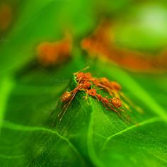 Red ant team work. by Pushish Images on @creativemarket