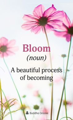 Bloom (noun): A beautiful process of becoming. flower quotes Word of the Day: Bloom Beautiful Flower Quotes, Beautiful Flowers, Daily Quotes, Life Quotes, April Quotes, Journal Quotes, Cottage Rose, Affirmations, Floral Quotes