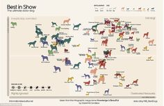 #Infographic rates the intelligence of #dogs, cost, health, lifespan and grooming. #Bordercollie wins.