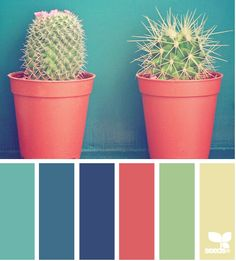 seeds color - Buscar con Google