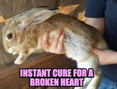 The cure for a broken heart. #valentinesday #rabbit #bunny #bunnies #cuteanimals #pets